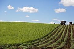 Agricoltura della carota in Tasmania Fotografia Stock