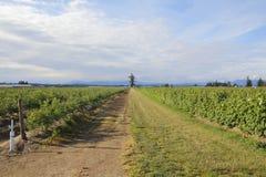 Agricoltura della Columbia Britannica Immagini Stock Libere da Diritti