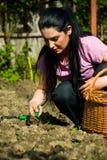Agricoltura della donna Immagini Stock