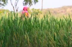 Agricoltura della donna Immagine Stock
