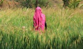 Agricoltura della donna Immagine Stock Libera da Diritti