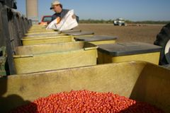 Agricoltura della famiglia Immagine Stock Libera da Diritti