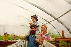 Agricoltura della famiglia coltivazione di agricoltura della famiglia concetto di agricoltura della famiglia industria di agricol fotografia stock libera da diritti