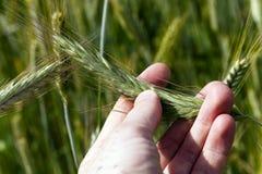 Agricoltura della foto, Europa Fotografie Stock Libere da Diritti