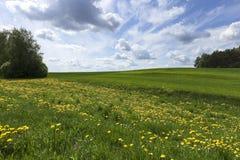Agricoltura della foto, Europa Immagine Stock