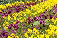 Agricoltura della foto, Europa Fotografia Stock Libera da Diritti