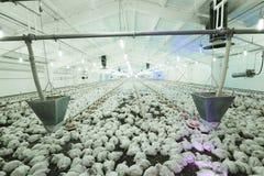 Agricoltura della foto, Europa Fotografia Stock