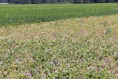 Agricoltura della foto, Europa Fotografie Stock