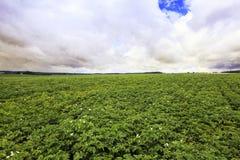 Agricoltura della foto, Europa Immagini Stock