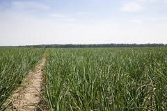 Agricoltura della foto, Europa Immagine Stock Libera da Diritti
