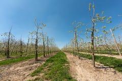 Agricoltura della frutta Fotografie Stock Libere da Diritti