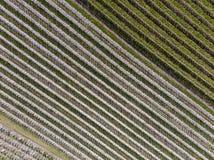 Agricoltura della frutta in Olanda Fotografie Stock Libere da Diritti