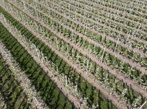 Agricoltura della frutta in Olanda Immagini Stock Libere da Diritti