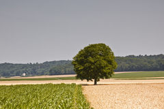 Agricoltura della Loira Immagini Stock