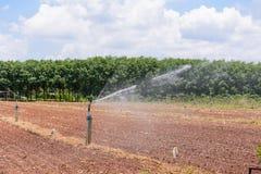Agricoltura della manioca Fotografie Stock