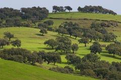 Agricoltura della montagna Fotografia Stock