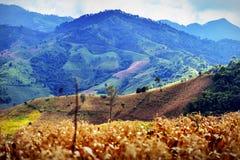 Agricoltura della montagna Fotografie Stock