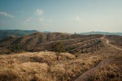 Agricoltura della montagna a Nan, Tailandia Fotografie Stock Libere da Diritti