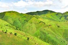 Agricoltura della montagna nel distretto di Chaloem Phra Kiat Fotografia Stock Libera da Diritti