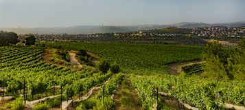Agricoltura della montagna vicino a Gerusalemme Fotografie Stock Libere da Diritti