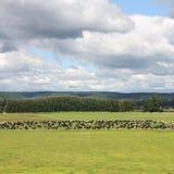 Agricoltura della Nuova Zelanda Fotografia Stock Libera da Diritti