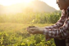 Agricoltura della pianta del bambino a disposizione Il primo piano della natura ed il fuoco selettivo e l'annata tonificano Fotografia Stock