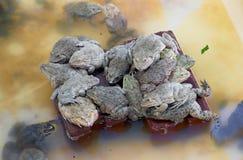 Agricoltura della rana Fotografia Stock