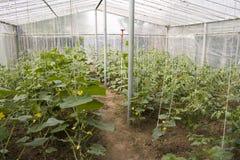 Agricoltura della serra Immagini Stock Libere da Diritti