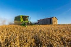 Agricoltura della soia Immagine Stock Libera da Diritti