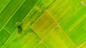 Agricoltura della stagione 5 Fotografia Stock Libera da Diritti
