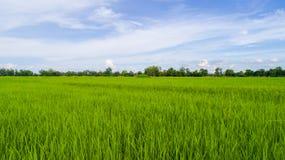 Agricoltura della stagione Immagini Stock Libere da Diritti