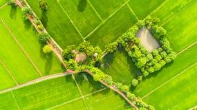 Agricoltura della stagione 12 Fotografia Stock Libera da Diritti