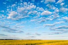 Agricoltura della stagione di agricoltura Fotografia Stock