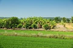 Agricoltura della Tailandia Fotografie Stock Libere da Diritti