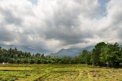 Agricoltura della Tailandia Campo verde Fotografia Stock