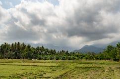 Agricoltura della Tailandia Campo verde Fotografie Stock