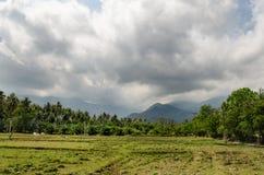 Agricoltura della Tailandia Campo verde Immagini Stock
