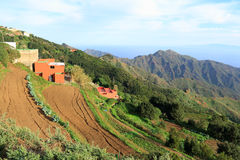 Agricoltura della Tenerife Fotografia Stock