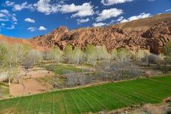 Agricoltura della valle del Marocco Dades Fotografia Stock Libera da Diritti