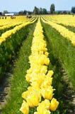 Agricoltura della valle di Skagit Immagini Stock Libere da Diritti