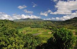 Agricoltura della valle su Kauai Hawai Fotografia Stock Libera da Diritti