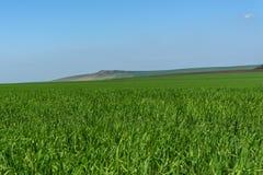 Agricoltura delle montagne del campo dell'avena Immagini Stock Libere da Diritti