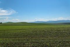 Agricoltura delle montagne del campo dell'avena Immagine Stock