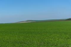 Agricoltura delle montagne del campo dell'avena Fotografia Stock