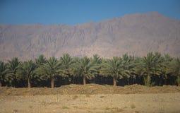 Agricoltura delle palme immagini stock