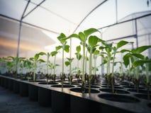 Agricoltura delle piante che coltivano germoglio con luce solare Immagini Stock