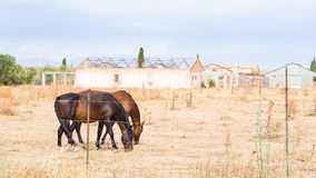Agricoltura delle serre dei cavalli Fotografia Stock Libera da Diritti