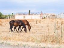Agricoltura delle serre dei cavalli Fotografie Stock