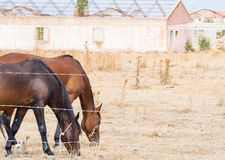 Agricoltura delle serre dei cavalli Immagine Stock Libera da Diritti