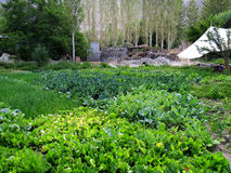 Agricoltura delle verdure Immagine Stock Libera da Diritti